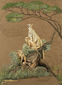 Mother Africa-Cheetahs