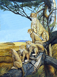 Quality Time-Cheetahs