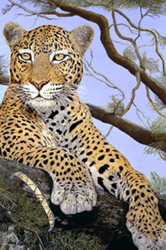 The Sentinel-Leopard, fine art ptint, with Gold bracelet