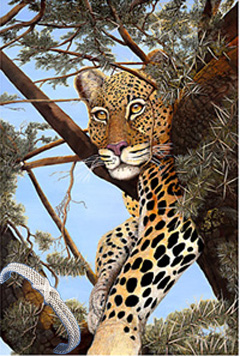 Heads Up! Leopard, fine art print, with Rhodium Cuff Bracelet
