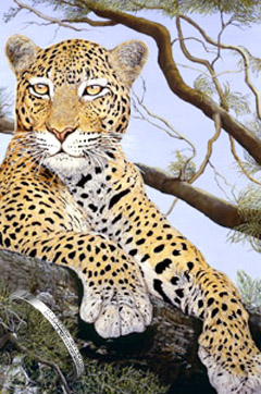 The Sentinel-Leopard, fine art print on canvas, with Bangle with CZs