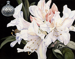 white Rhododendrun, fine art print, with gold and silver Pendant